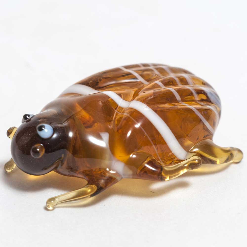 Glass May-bug